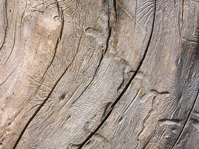 Процесс сушки древесины