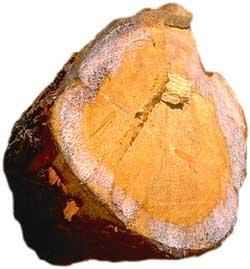 Химический состав древесины