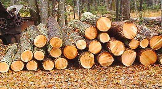 Свойства различных пород деревьев