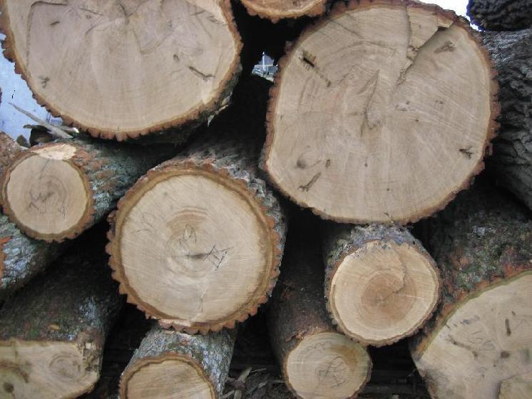 Тайны древесных пород