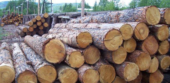 Хранение круглого лесоматериала