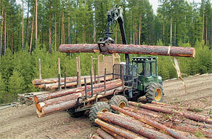 В Иркутске на 12% снизился объем лесозаготовки