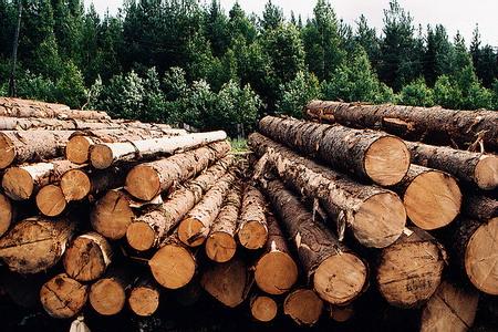 Влияние кризиса на деревообрабатывающую промышленность России