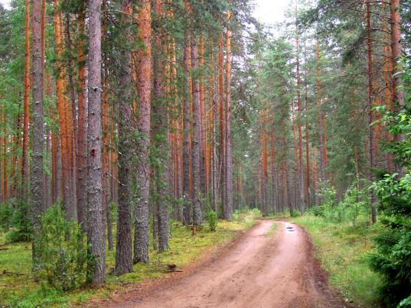 В России для развития лесных дорог требуется комплексный подход