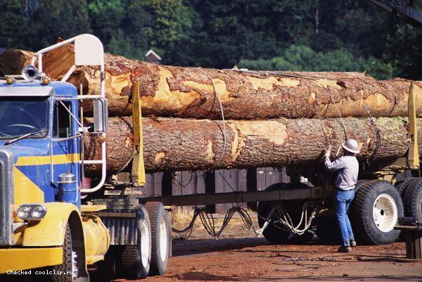 Ввод заградительных пошлин на экспорт круглого леса откладывается до 2011 года