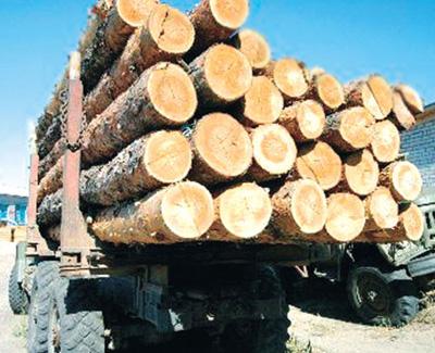 Повышение пошлин на вывоз леса отсрочили до 2011 года