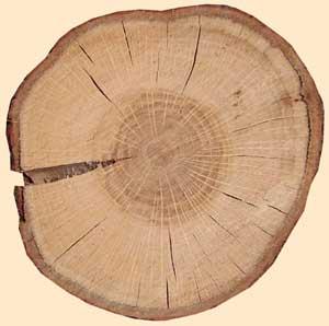 Древесина как неоднородный материал