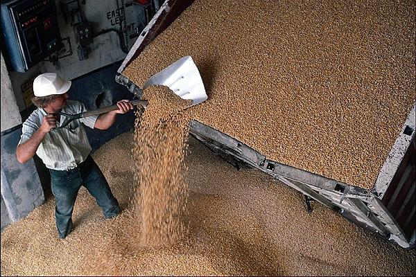 Биотопливной отрасли России прогнозируют большое будущее